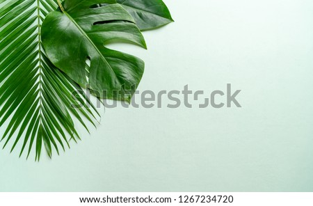 Tropical palm leaves on color background with copy space #1267234720