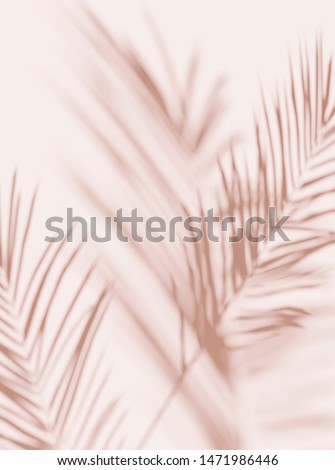 Tropical palm leaves on  light pastel background. Unobtrusive botanical background with shadow on the wall - trend frame, cover, card, postcard, graphic design - 3D, render, illustration.