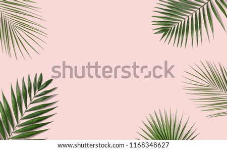 Tropical palm leaves on pink background for design. Summer Styled. High quality image. Top view