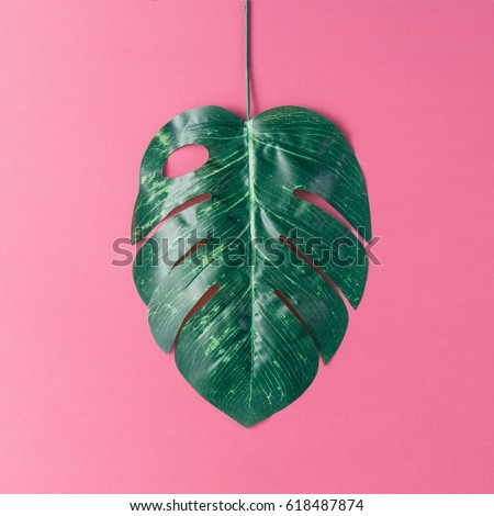 Tropical palm leaves on pink background. Minimal nature summer concept. Flat lay. #618487874