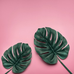 Tropical palm leaves on pink  background. Minimal nature summer concept. Flat lay. Place for text