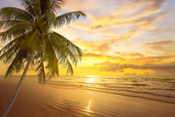 tropical palm tree and sea at sunset