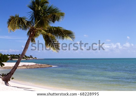 Tropical palm tree hangs over the beach on Marathon Key in the middle of the Florida Keys. A lone swimmer snorkels in the distance.