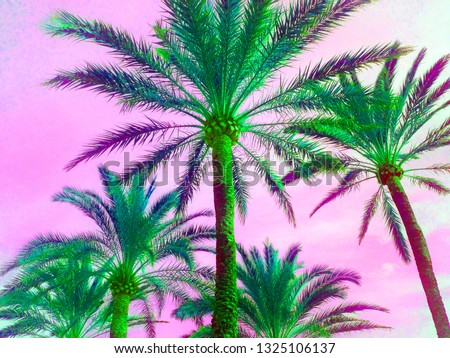 tropical palm tree in retro neon 80's summer vibe saturated in bright pink and ufo green exotic  trend  pop art stock, photo, photograph, picture, image,