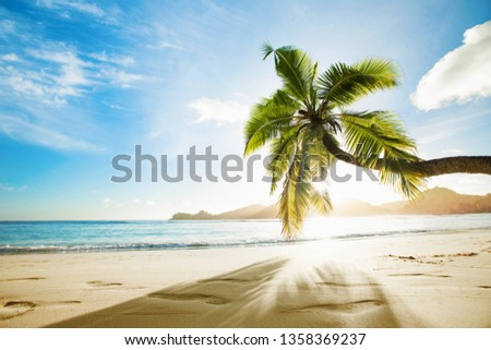 Tropical Palm Tree in the Sunshine. Paradise Island in the Ocean #1358369237