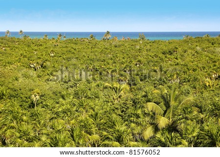tropical palm tree jungle in Sian Kaan near Tulum Mexico