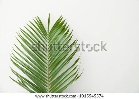 Tropical palm tree leaf on a plain white background #1015545574