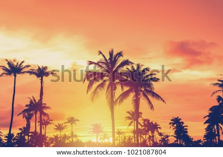 Tropical palm tree with colorful bokeh sun light on sunset sky cloud abstract background. Summer vacation and nature travel adventure concept. Vintage tone filter effect color style. #1021087804