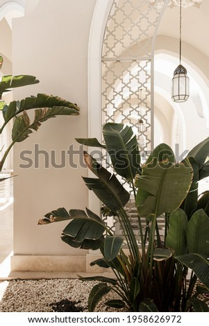 Tropical palm tree with lush green leaves near white house, resort building. Travel, summer vacation concept
