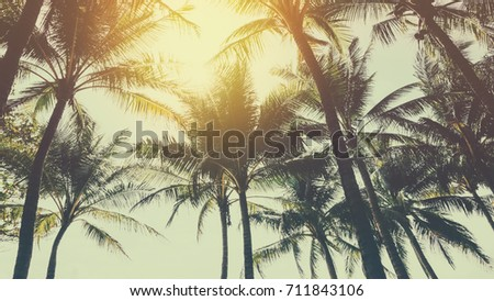 Tropical palm tree with sun light on blue sky and white cloud abstract background. Summer vacation and nature travel adventure concept. Vintage tone filter effect color style.