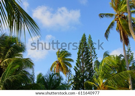 Tropical palm trees and sky #611640977