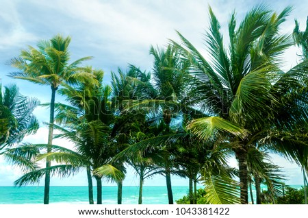 Tropical Palm trees on the Miami beach, Florida, USA #1043381422