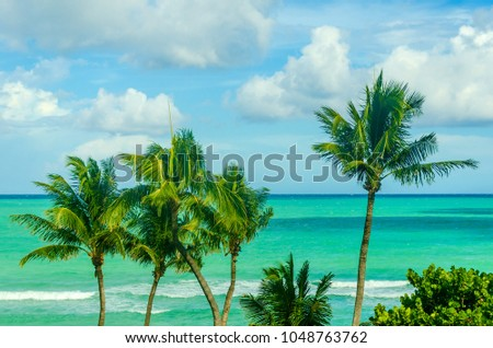 tropical palm trees on the...