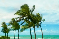 Tropical Palm trees on the Miami beach near the ocean, windy weather, Florida, USA