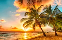 tropical palms on the beach