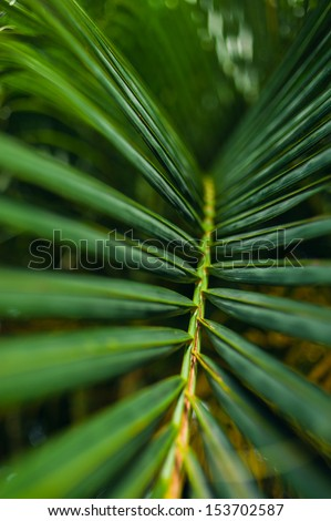 Tropical Paradise. a green tropical forest. Pathway in tropical park - abstract travel background.