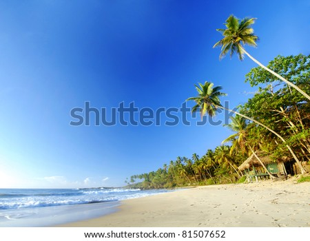 Tropical paradise in Sri Lanka, Tangalle with palms hanging over the beach, old wooden hut and turquoise sea