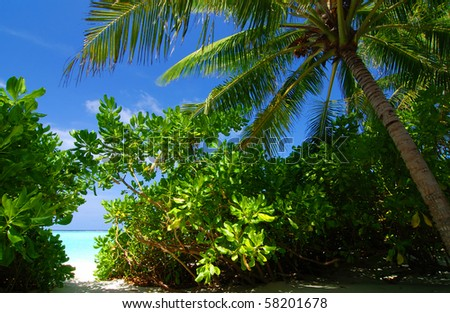 Tropical paradise in The Maldives with a coconut palm and a view at the sea