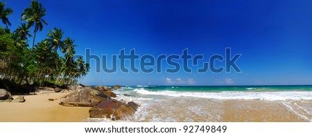 Tropical paradise on Sri Lanka with palms hanging over the beach and turquoise sea. Panorama
