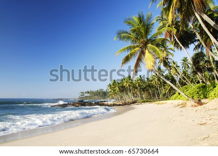 Tropical paradise on Sri Lanka with palms hanging over the white beach and turquoise sea
