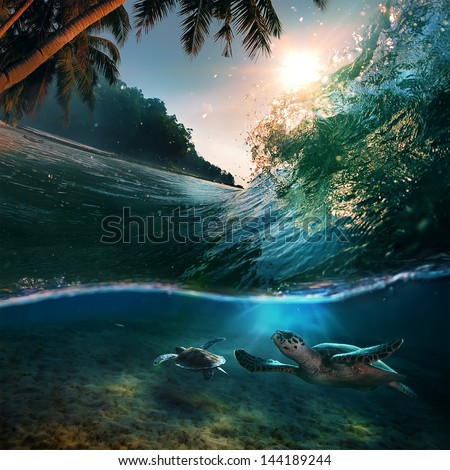 Tropical paradise template with sunlight. Ocean surfing wave breaking and two big green turtles diving underwater #144189244