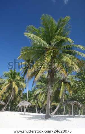 Tropical Paradise - White Sands Beach and Coconut Palm Trees background suitable for a variety of traveling and advertising designs
