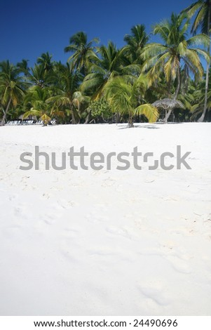 Tropical Paradise - White Sands Beach, Caribbean Coconut Palm Trees background suitable for a variety of traveling and advertising designs