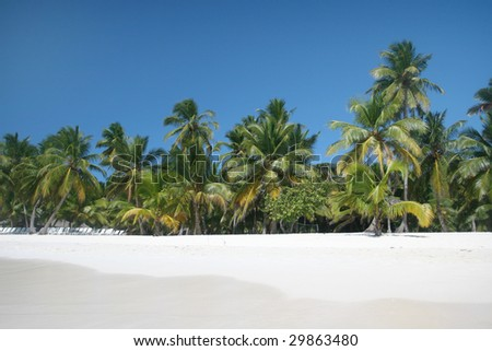 Tropical Paradise - White Sands Beach, Caribbean Ocean and Coconut Palm Trees background suitable for a variety of traveling and advertising designs