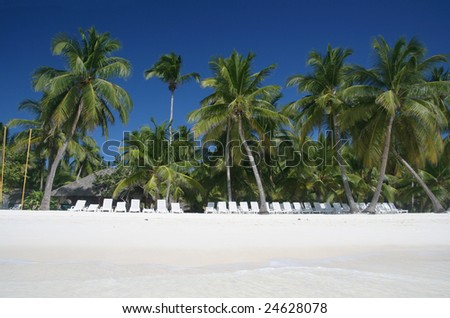 Tropical Paradise - White Sands Beach, Lounge Chairs and Coconut Palm Trees background suitable for a variety of traveling and advertising designs