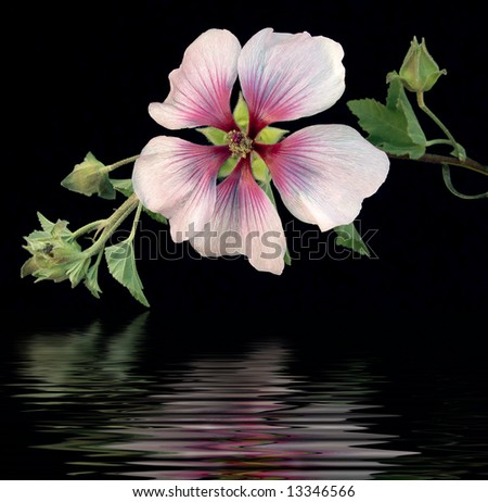 Tropical Passion II - stock photo