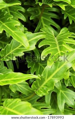 Tropical Plant - stock photo