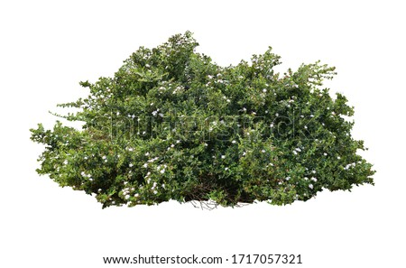Photo of  Tropical plant flower bush tree isolated on white background with clipping path