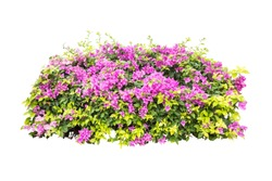 tropical plant flower bush tree isolated with clipping path