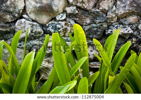 Tropical plants against a wall