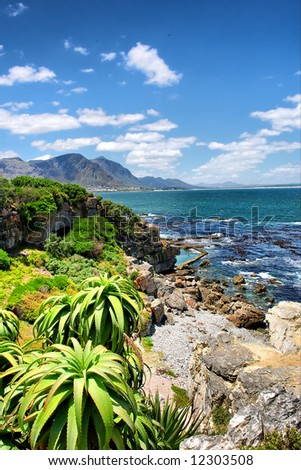 Tropical plants against awesome sea and rocks. Shot in Hermanus, Walker Bay, Western Cape, South Africa.