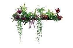 Tropical plants bush decor (hanging Dischidia, Bromeliad, Dracaena, Begonia, Bird's nest fern) indoor garden houseplant nature backdrop, vertical garden wall planter isolated on white, clipping path.