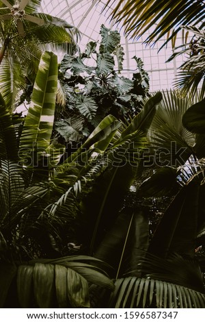 Tropical plants in a large city conservatory full of flowers and other massive specimens Сток-фото ©