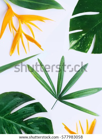 tropical plants on white background #577983058