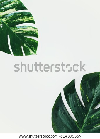 tropical plants on white background #614395559