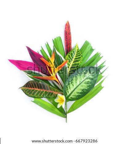 tropical plants on white background        #667923286