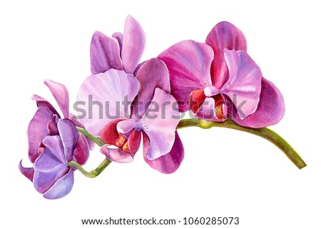 tropical plants, orchid,  flora watercolor illustration, botanical painting, hand drawing.