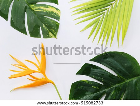 tropical plants with card on white background #515082733