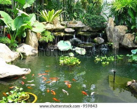Tropical pond - stock photo
