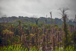 Tropical rain forest in Central Africa