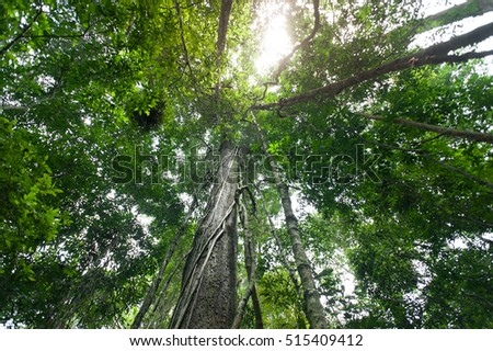 outdoor woods backgrounds. Tropical Rain Forest With Green Trees,nature Wood Sunlight Backgrounds  #515409412 Outdoor Woods S