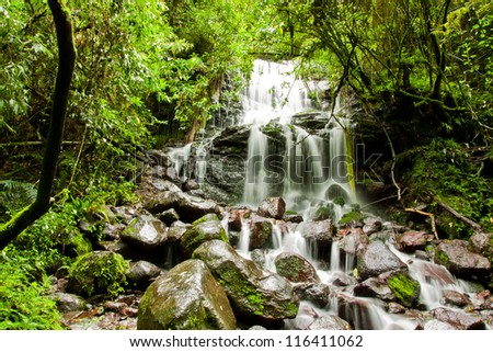 tropical rain forest with waterfall - stock photo