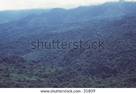 Tropical Rainforest - stock photo