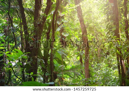 Tropical rainforest background with sun glow