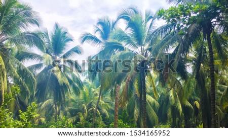 Tropical rainforest, beautiful plams, natural park