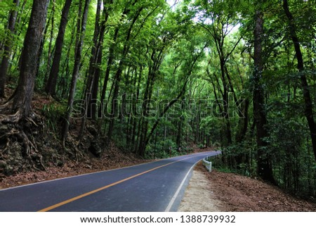 Tropical rainforest. Beautiful tropical rainforest in Philippines. Forest road